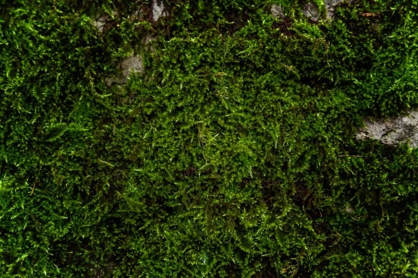 how to get rid of moss on roof