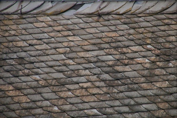 a commercial-grade shingle roof