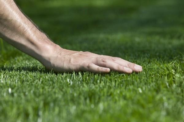 hand touching trimmed green grass