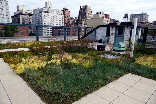 an elegant green roof in the middle of an urban area